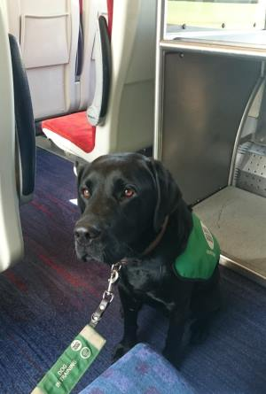 assistance dog on train