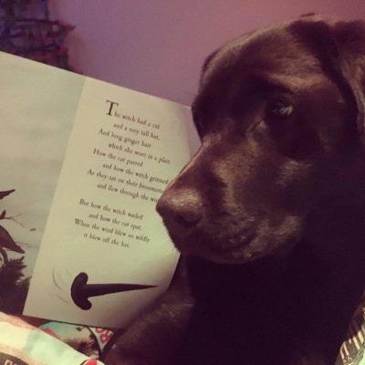 black Labrador with book