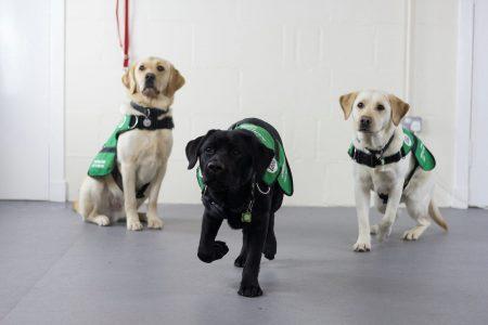 3 dementia dogs in training