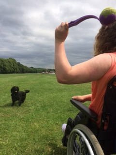 girl in wheelchair throws stick for assistance dog