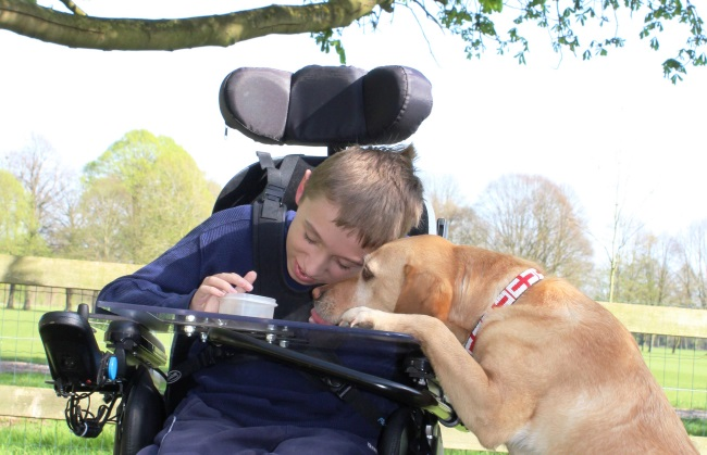 8 ways assistance dogs help children with physical disabilities