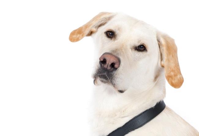 Meet Rita a dementia community dog