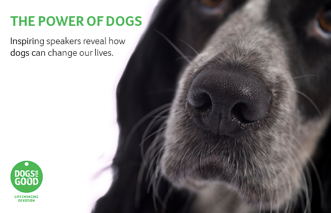 Dog's face and Power of Dogs promo