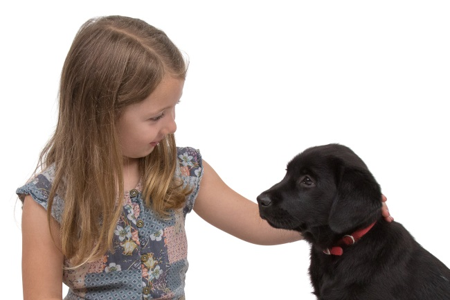 girl with Labrador puppy