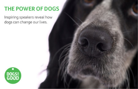 Power of Dogs promo with dog's nose