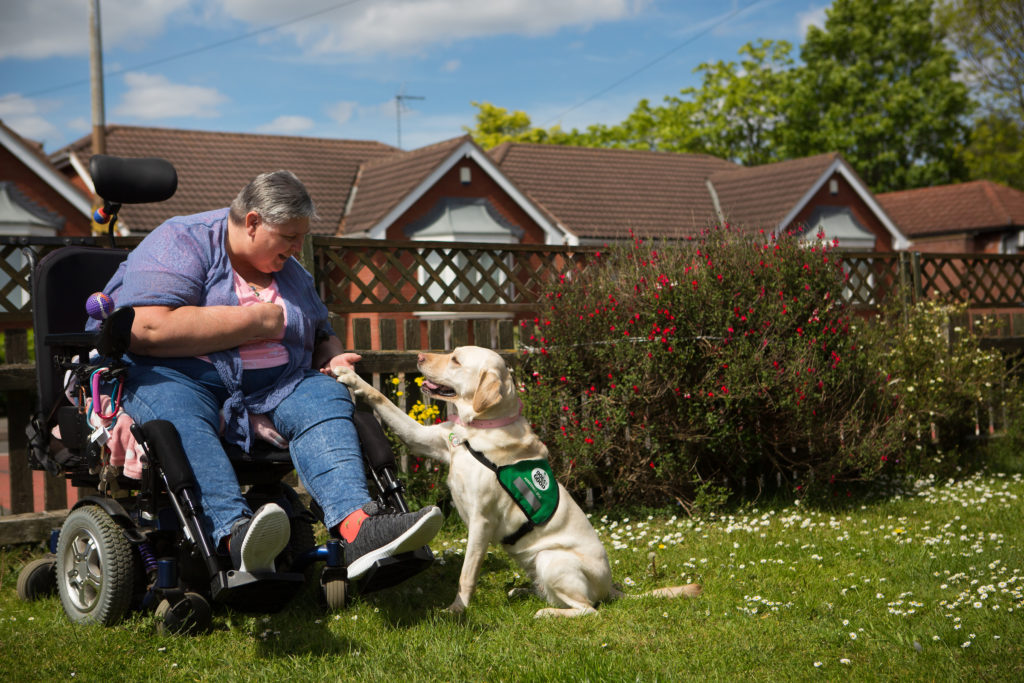 assistance dog gives paw to woman in wheelchair