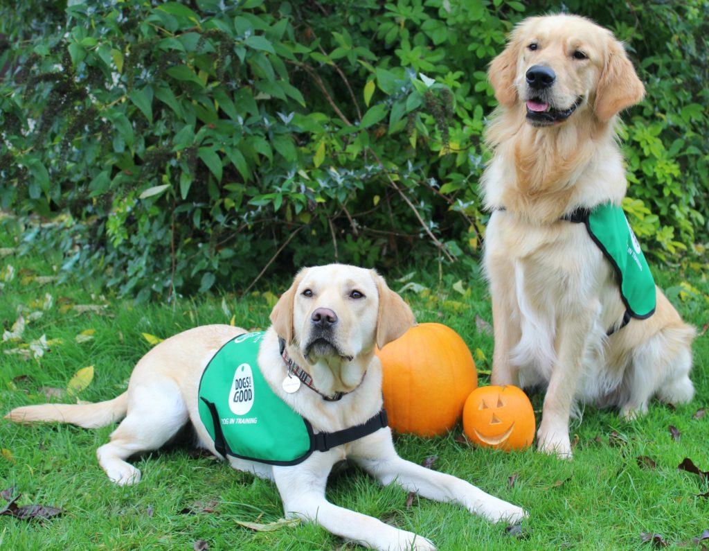 Dogs for Good at Halloween