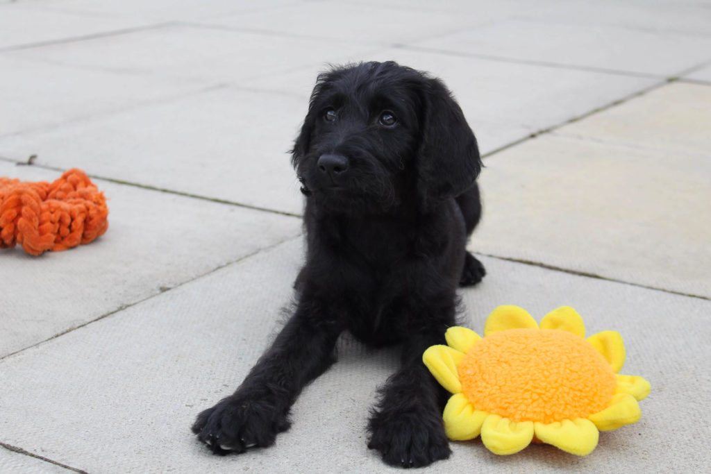 Puppy Iris with flower toy