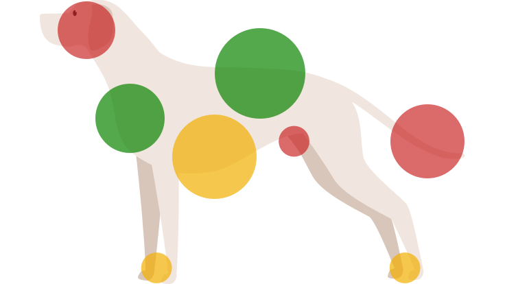 Image showing where dogs are comfortable being touched