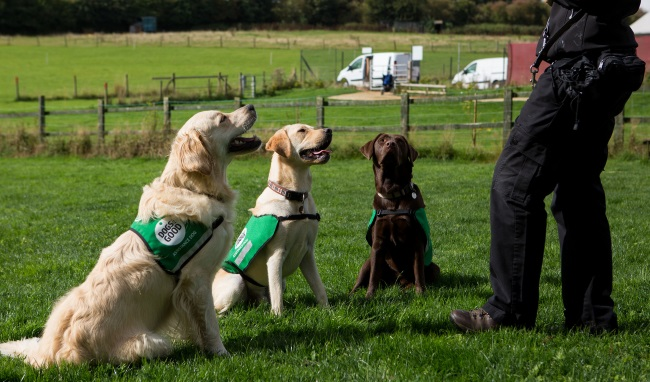 Breeds we work with - golden retriever, yellow labrador and chocolate labrador sat in front of a trainer outside