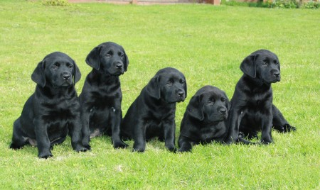 Assistance Dogs of the future