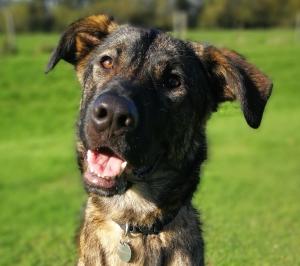 https://www.dogsforgood.org/wp-content/uploads/2015/03/Travis-web.jpg