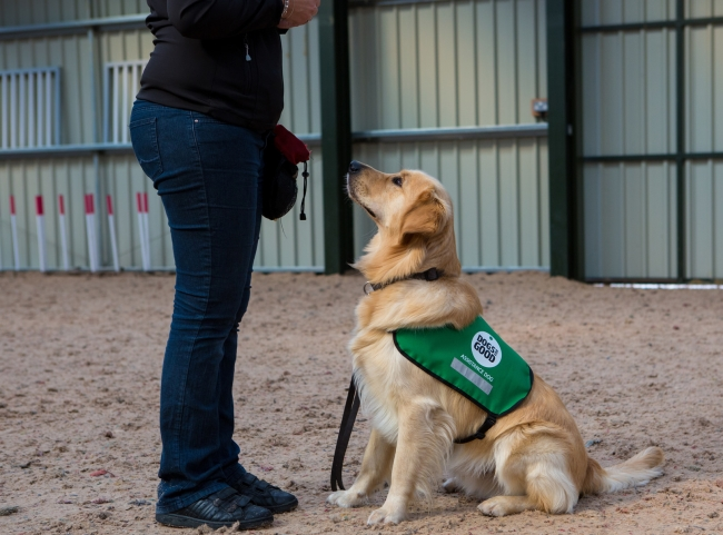 Dog Obedience Training Banbury
