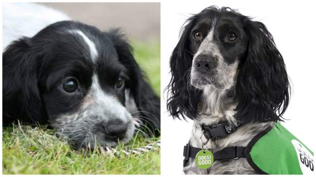 £1000 puppy partner