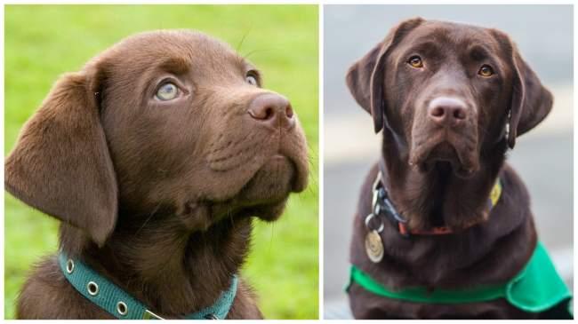 £5000 puppy partner