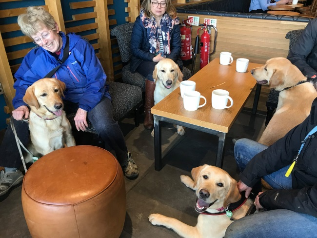 Group of socialisers and young dogs in training in a cafe