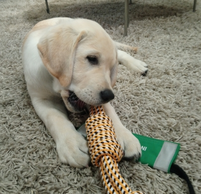 This Morning puppy Digby settling with a toy