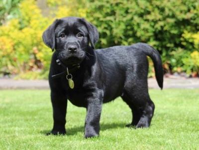 Tiny puppy Morris