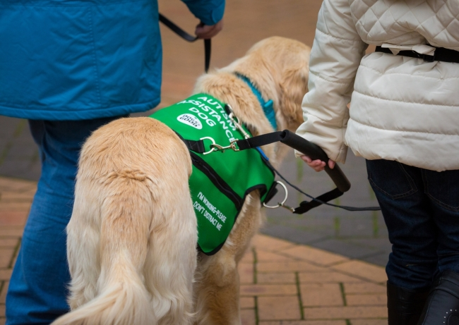 Can I say hello to an assistance dog?