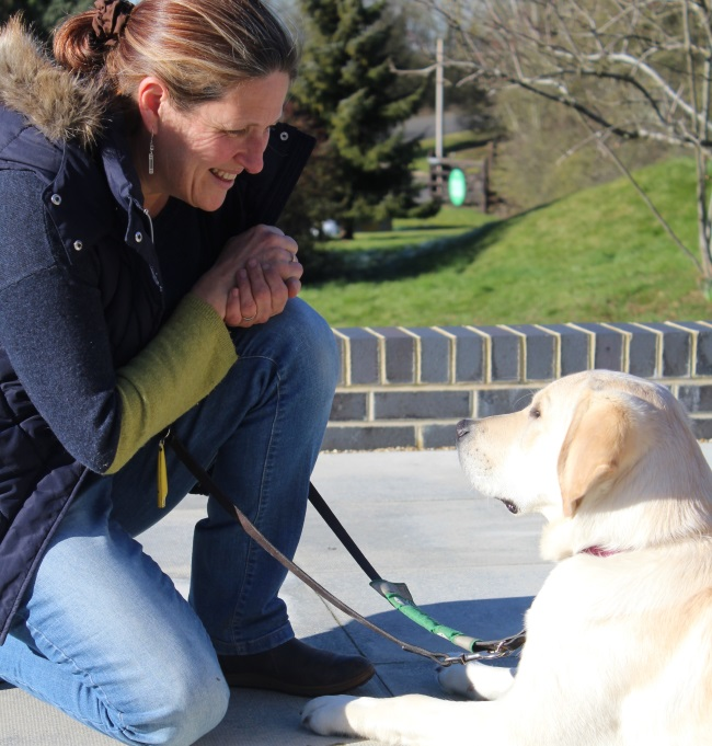 Preparing puppies to be life-changing assistance dogs