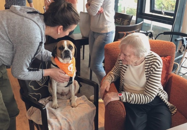 dementia community dog