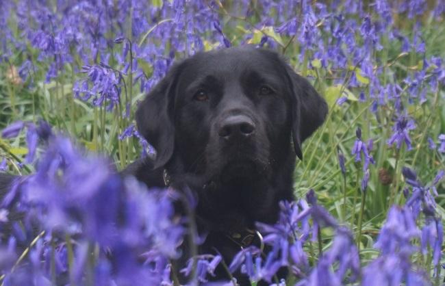 community dogs - Ursa