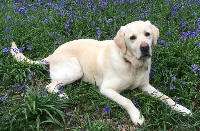community dogs - Fleck